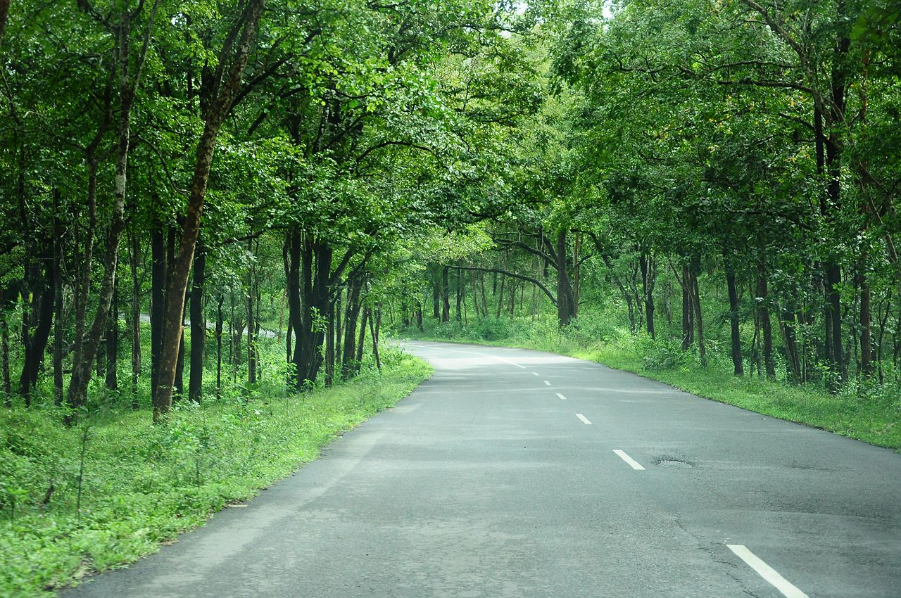 Bandipur Forest route to Bangalore Road Trip