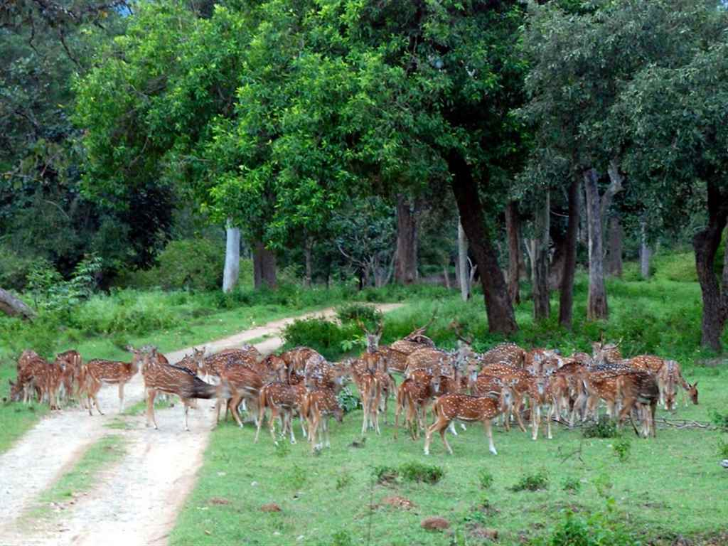 Forest of Bandipur