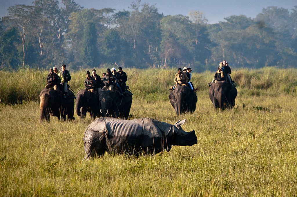 Kaziranga National Park Safari