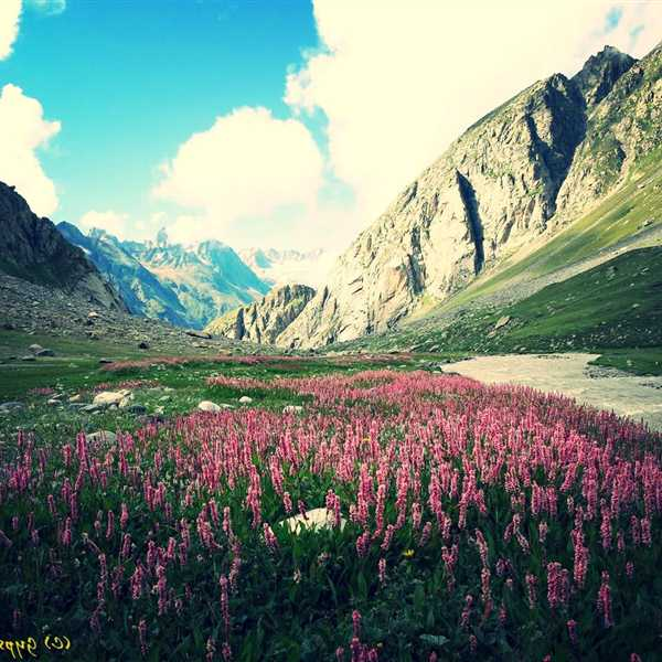 Honeymoon-Packages-Shimla-Kullu-Manali (2)