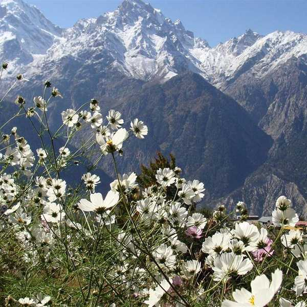 Honeymoon-Packages-Shimla-Kullu-Manali (9)