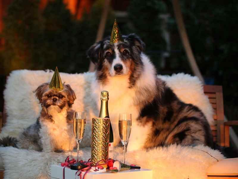House party celebration