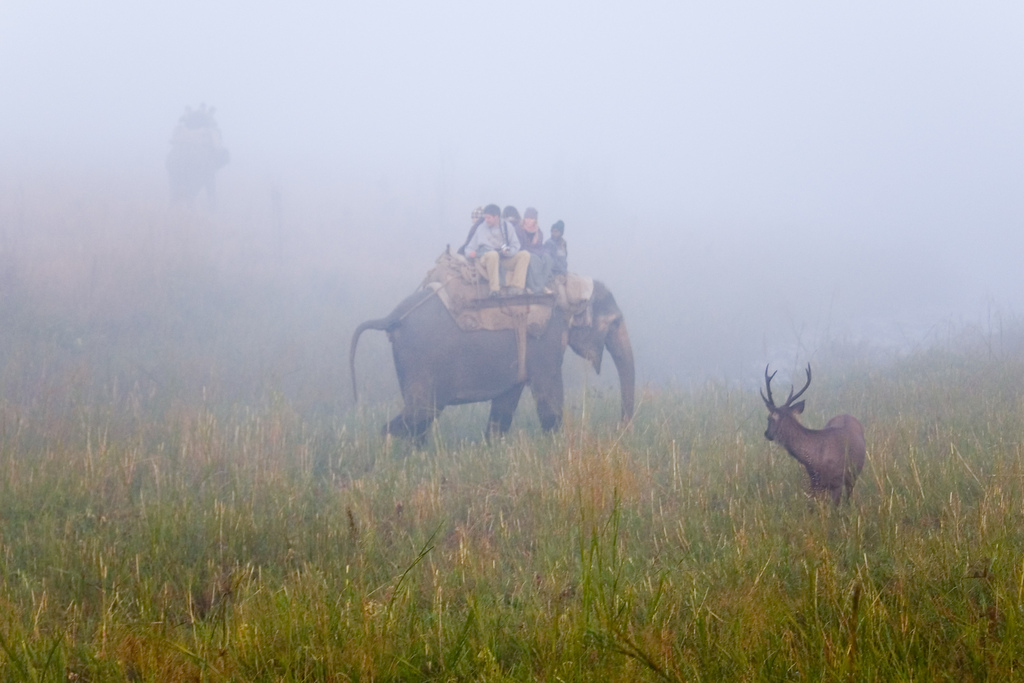 Jim Corbett National Park Safari