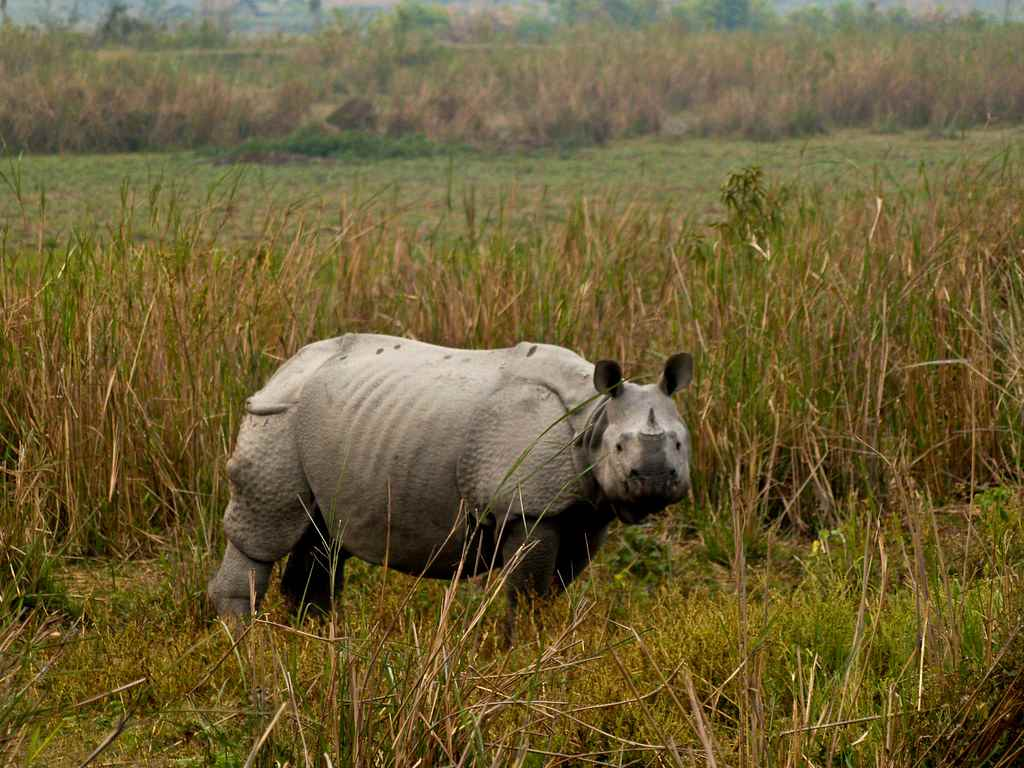 Kaziranga National Park in Winter