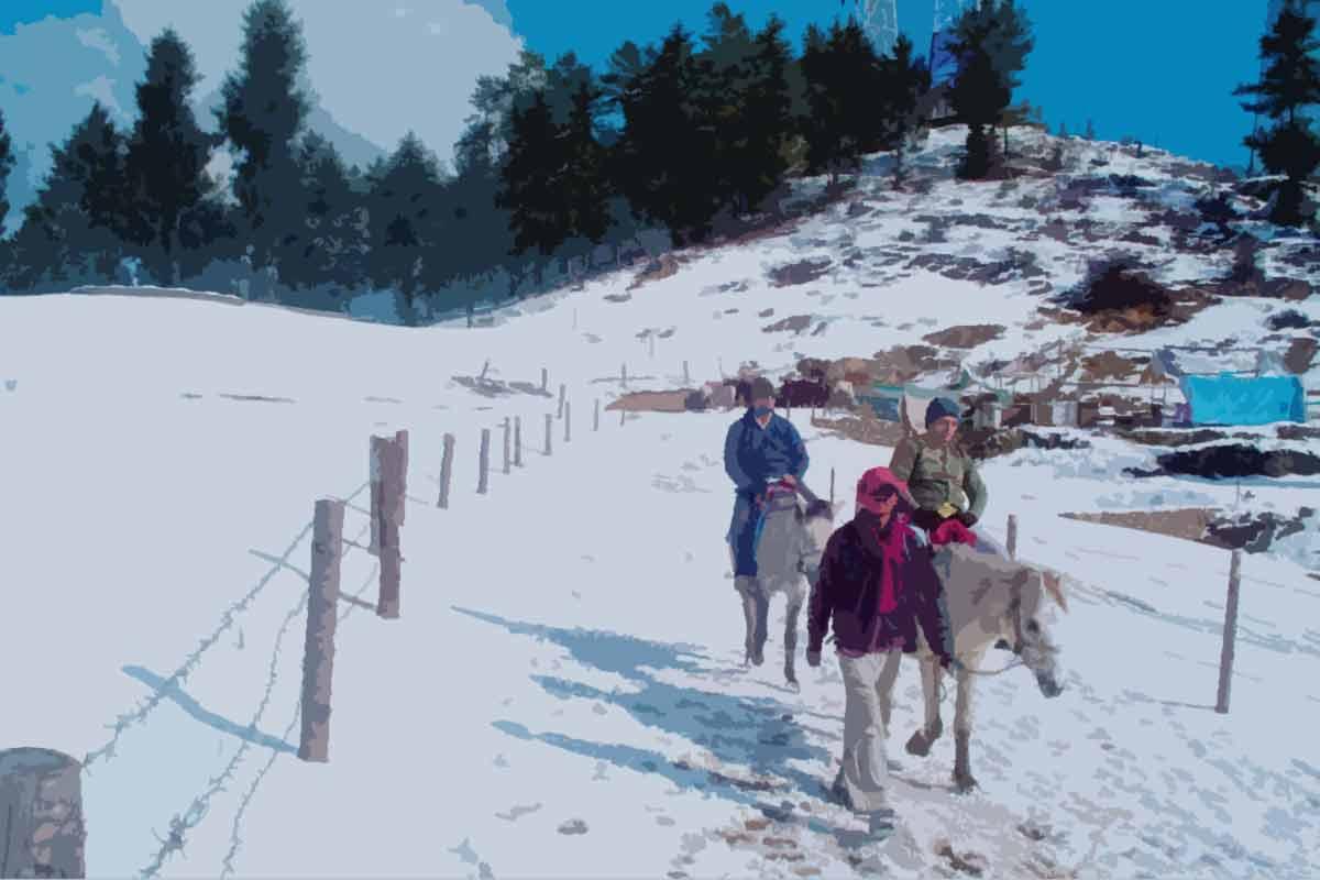 Horse Riding Kufri Hill Station Shimla Himachal Pradesh