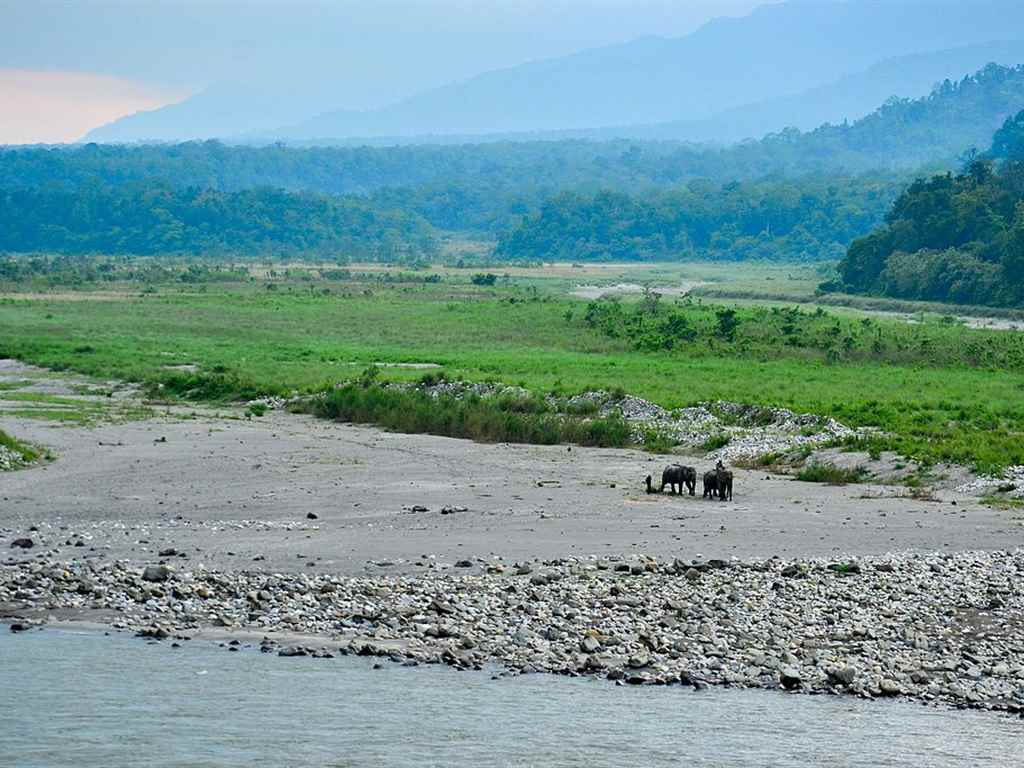 Manas National Park in Winter