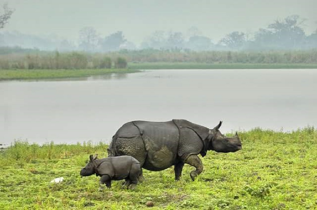 Manas Wildlife Sanctuary Safari