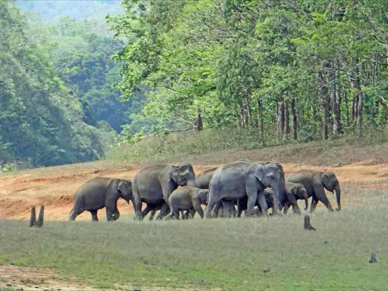 Meet the Elephants in Kerala