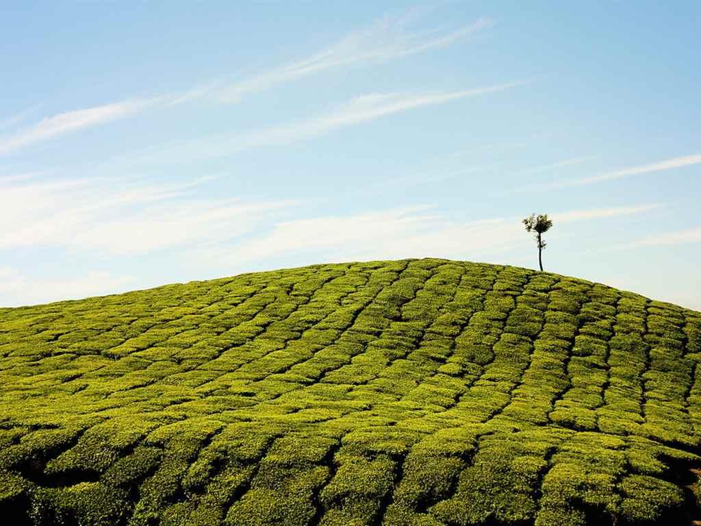 Munnar Winter Holiday Destinations
