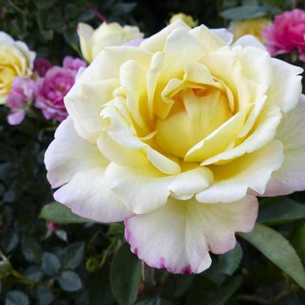 Newlyweds-Honeymoon-Flowers (36)