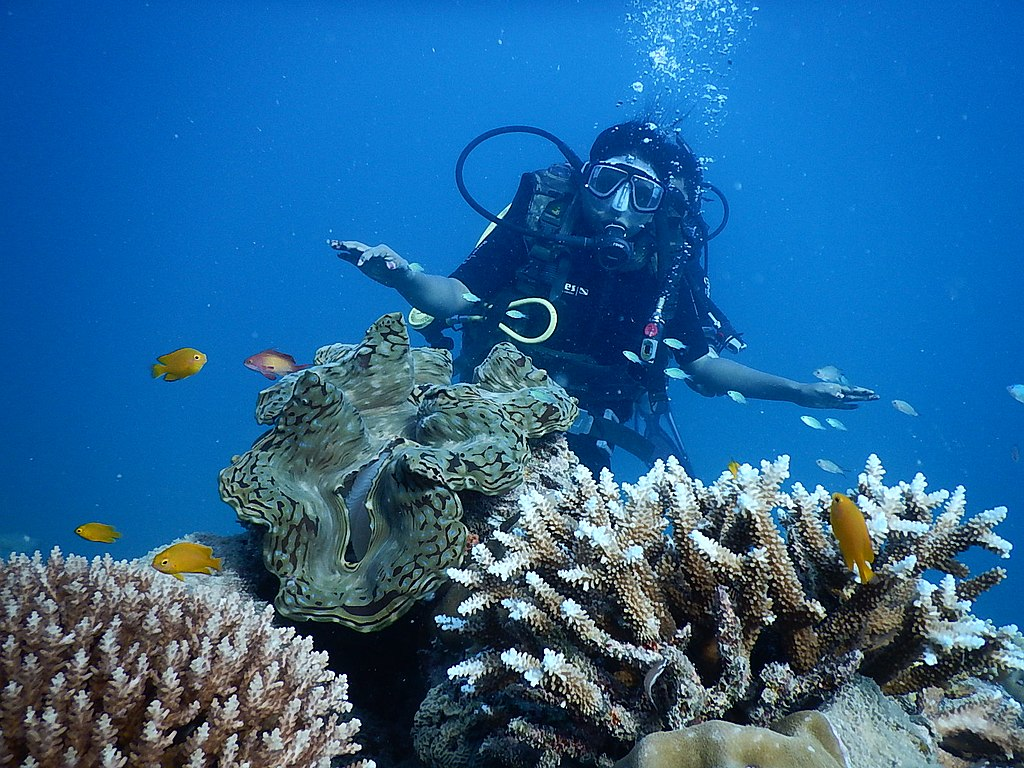 Scuba Diving in  Andaman and Nicobar Island