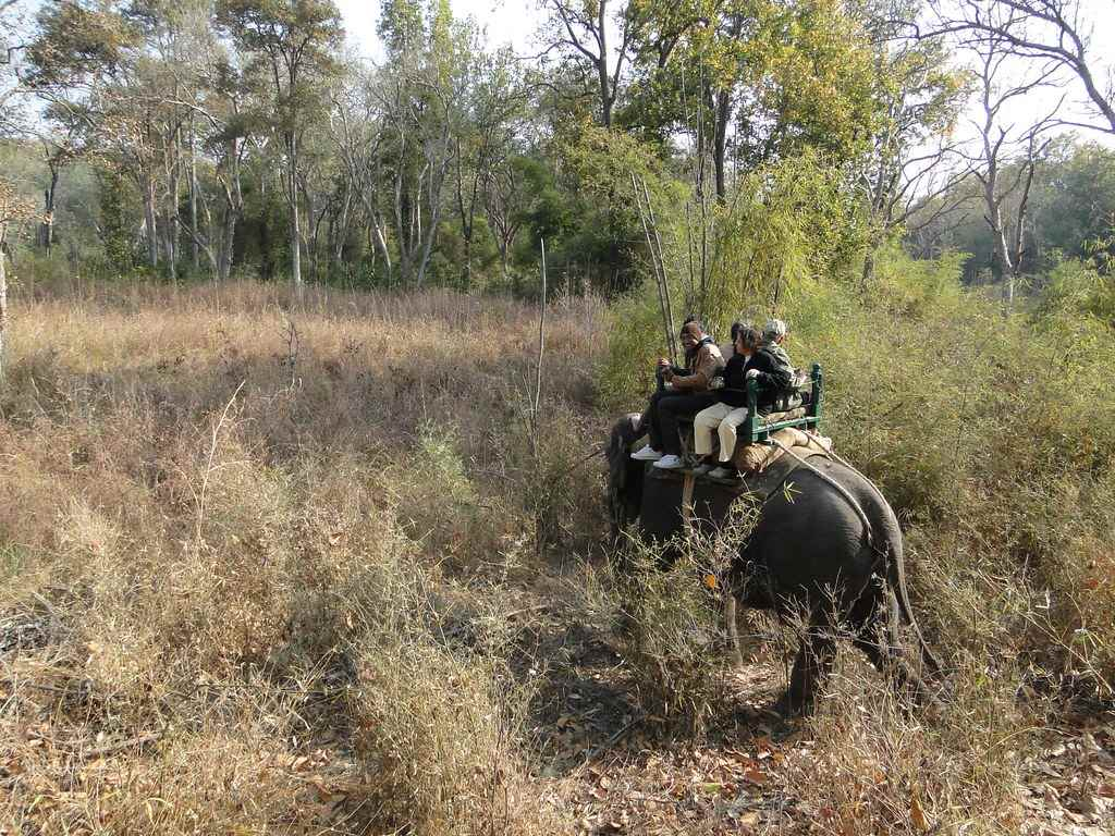 Pench National Park in Winter