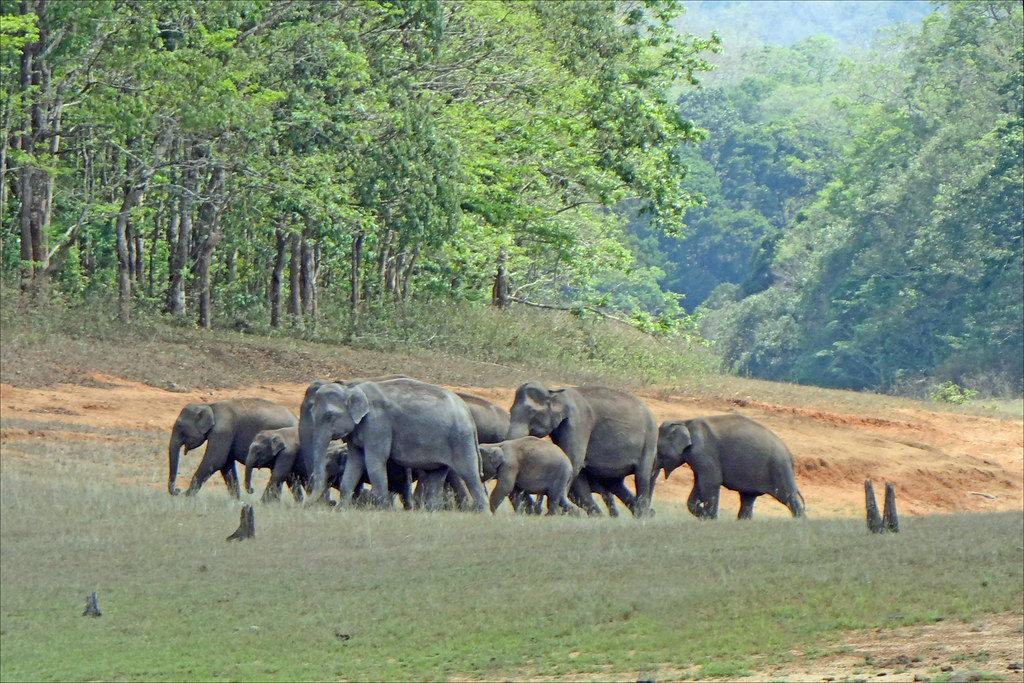 Thekkady Honeyoon Packages