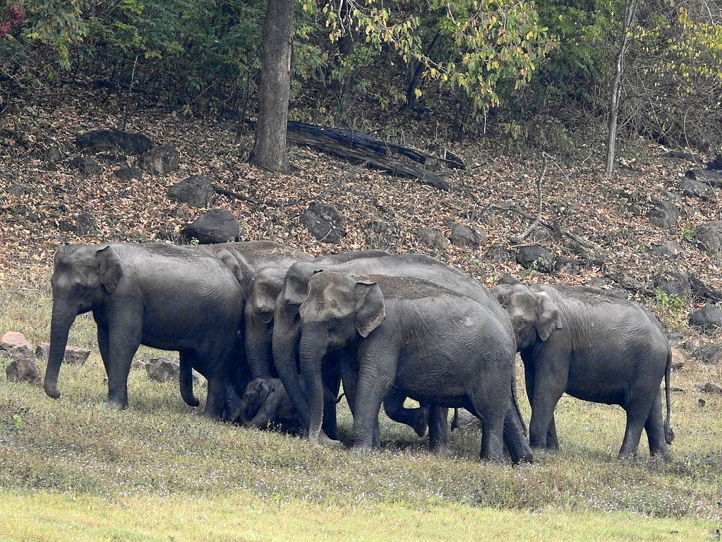 Periyar Wildlife Sanctuary Safari