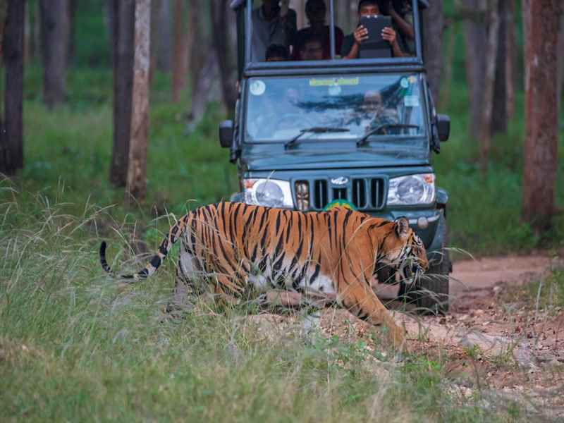 Family Holidays in Ranthambore