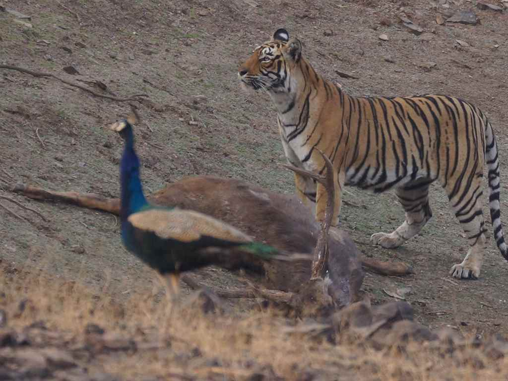 Ranthambore National Park in Winter