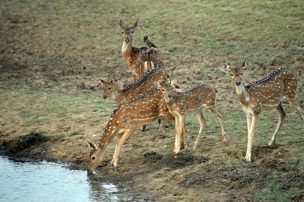 Satpura National Park Safari