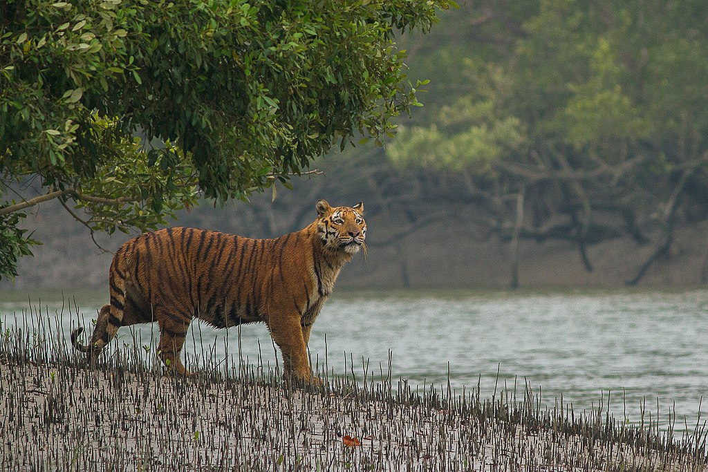 Sunderban National Park Safari