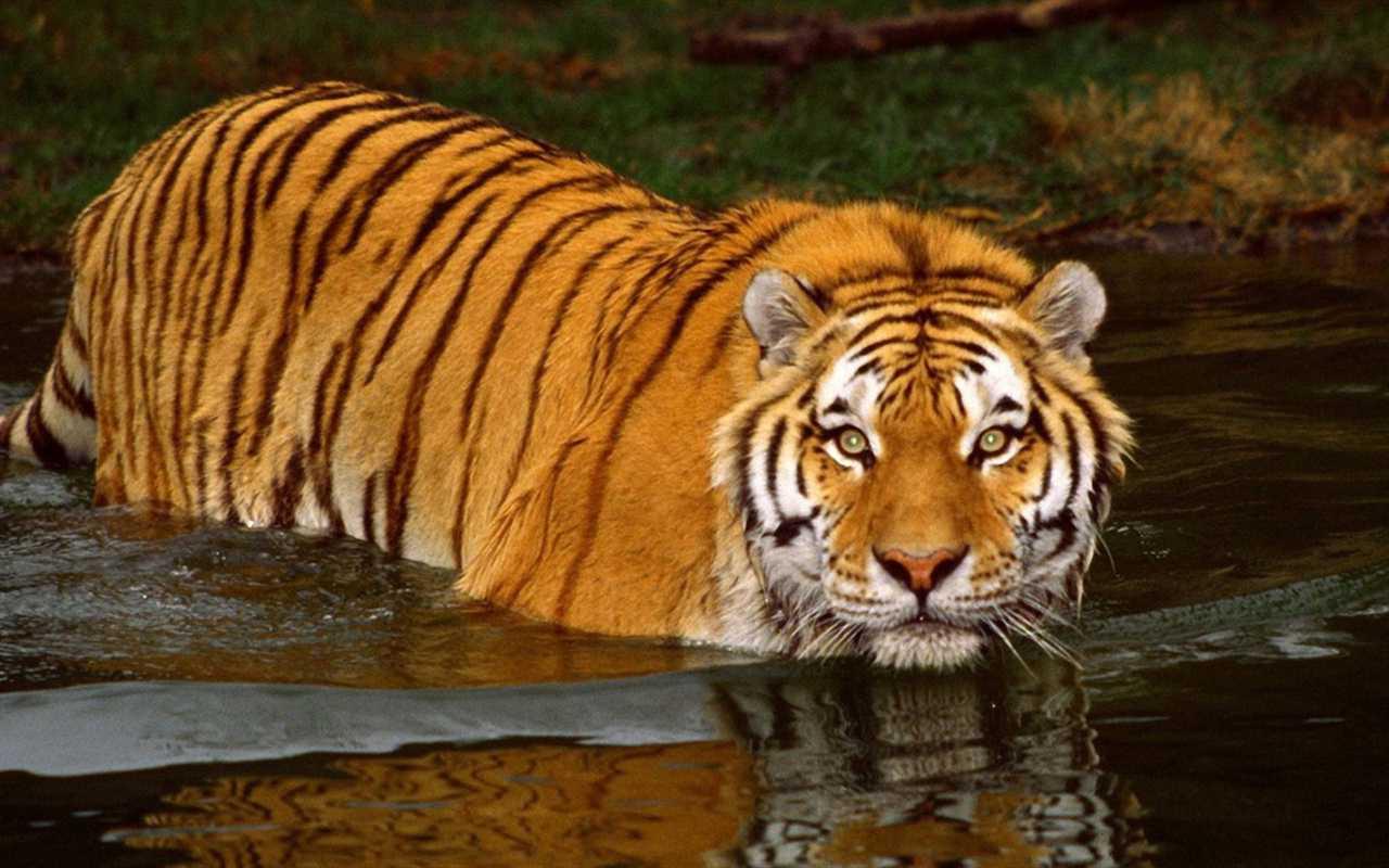 Wildlife Safari Destinations in India