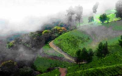 wayanad-in-winter