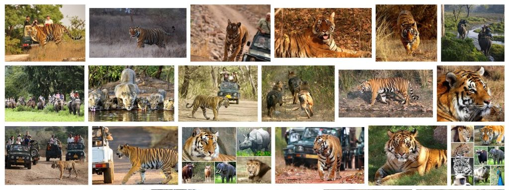 wildlife-safari-india